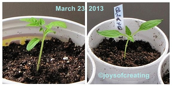 2013-seedlings