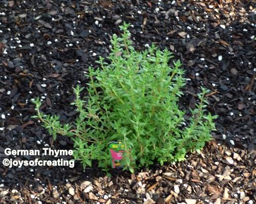 rosemary | Joys Of Creating