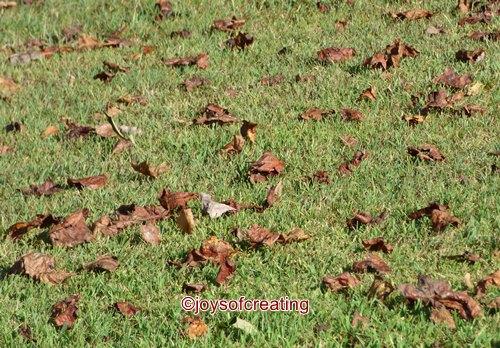 9-15-2016-leaves